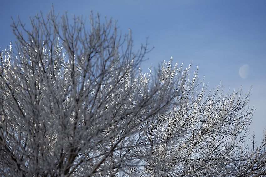 Frost in the Red River Valley