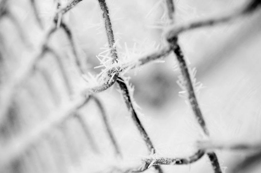 Photograph of Hoar Frost in Fargo, North Dakota